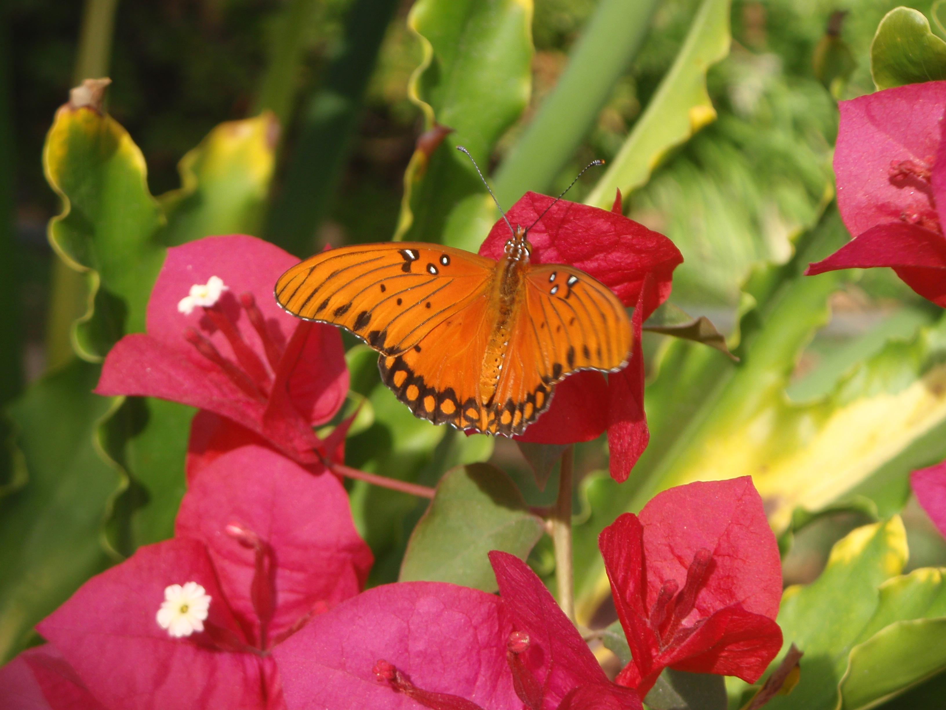 Miriam Delicado: Butterfly